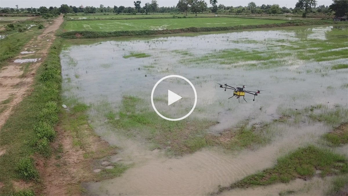 drone sprayer for application of paddy herbicides