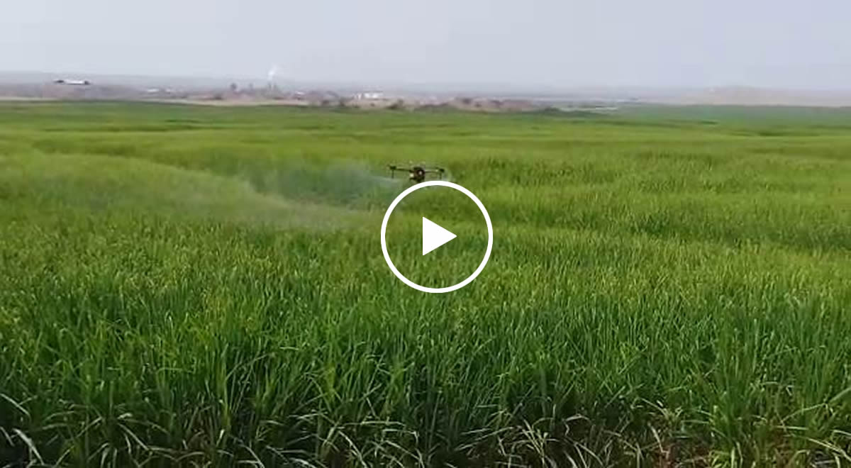 Drone spraying video taken by Peru customers