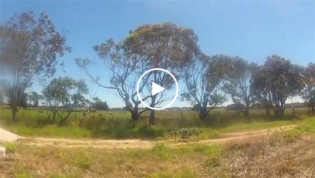 Joyance drone spraying fennel in Australia