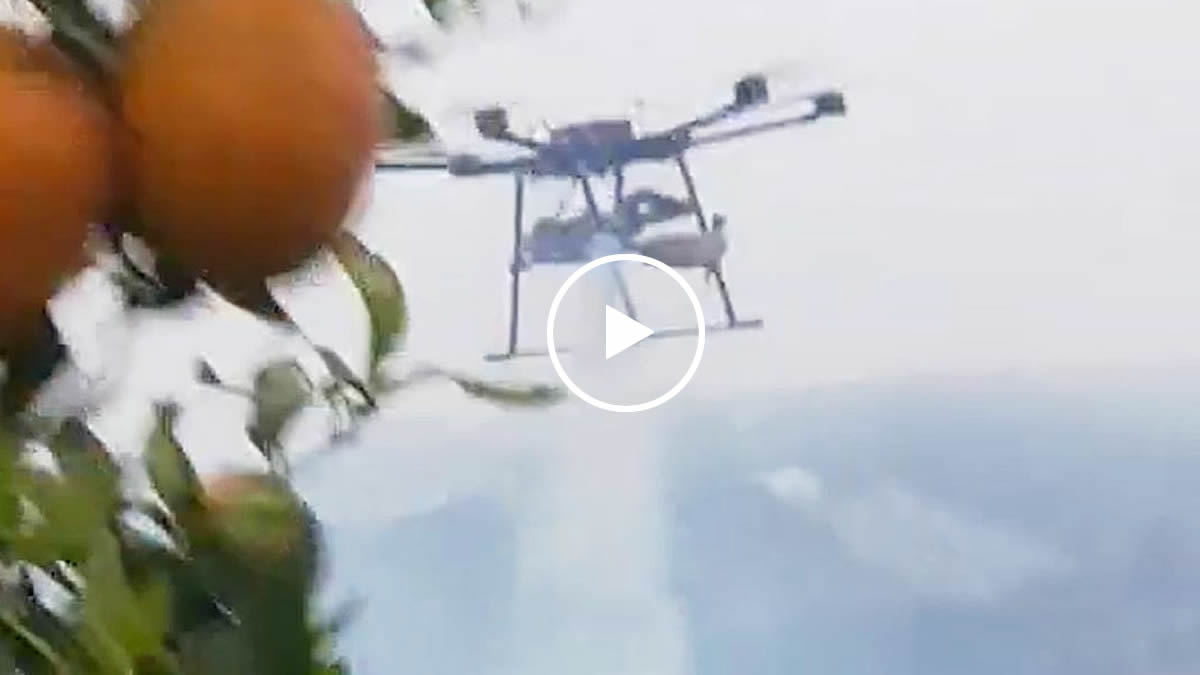 Joyance thermal fogging drone spraying orange tree